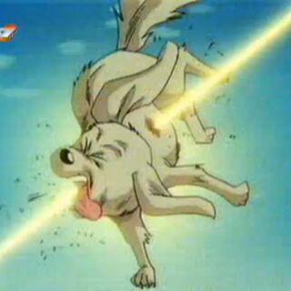 Pies zostaje postrzelony.