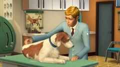 Weterynarz leczy zwierzaka