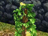 Owoc życia