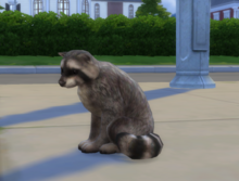 Szop w The Sims 4