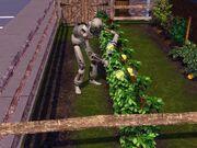 Simbot w ogrodzie