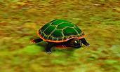 Żółw 3