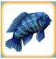 Blue Cichlid