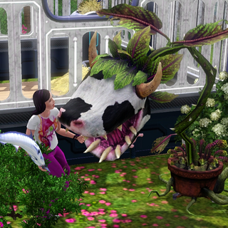 Karmienie Krowo-kwiatu<sup class=