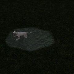 Mały pies bawiący się w kałuży