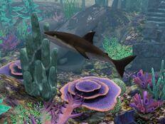 Rekin w Syreniej Grocie