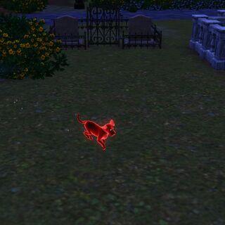 Duch psa na cmentarzu w Appaloosa Plains