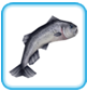 Salmon (freeplay)