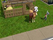 Ile tu jest koni 8