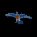 Bluebird Transparent
