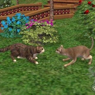 Koty w The Sims 2: Zwierzaki