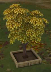TS4CPR DrzewkoPieniężne