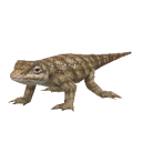 Texas Horned Lizard