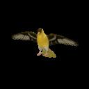 Goldfinch Transparent