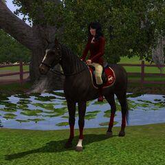 Simka siedząca na koniu