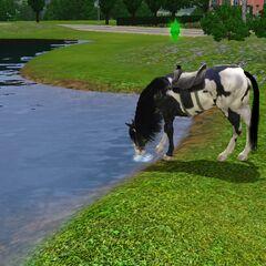 Koń pije wodę.