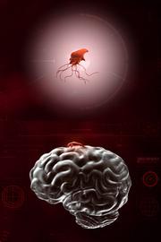 Простой геном червя