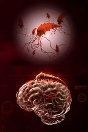 Сложный геном червя