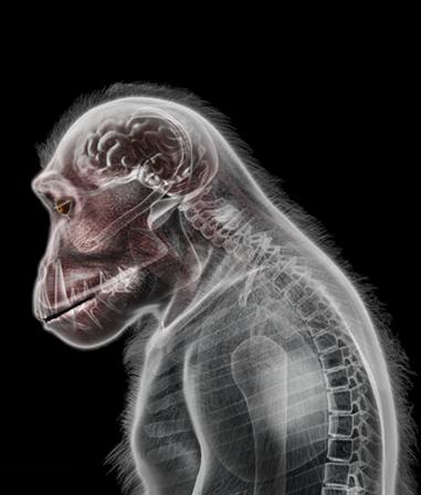 File:Petridish ape1@2x.png