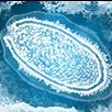Frozen Virus Scenario.png