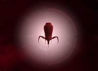 Простой геном нано-вируса