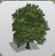 Sycamore Tree 2 icon