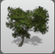 Beach Tree 2 icon