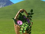 Hanging Basket - Round