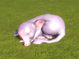 Sleeping Drat