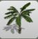 Banana Palm Tree icon