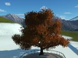 Oak Tree 1 Autumn