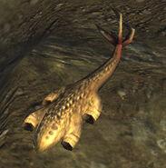 Lungfish2