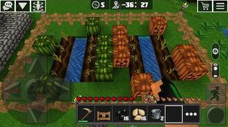 Farming Melons and Pumpkins