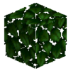 0193 0058 leaves birch