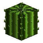 0200 0055 cactus