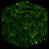 0191 0059 leaves