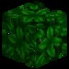 0195 0057 leaves jungle