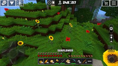 Sunflower view