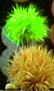 LimeFurBall