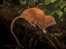 Rata-gigante 0