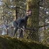 EpidexipteryxPortrait