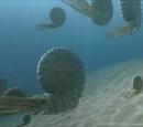 Jurassic Ammonite