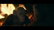 WPOTA Bad Ape