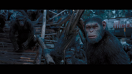 WPOTA Caesar's presence restores the apes' strength