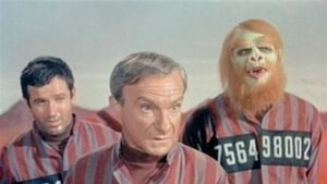 Lost apes