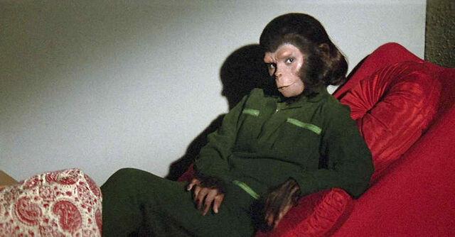 File:Breeding Chimp.jpg
