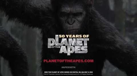 Ape Biology I Orangutans