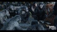 Ape Council