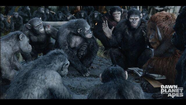 File:Ape Council.jpeg