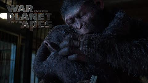 War for the Planet of the Apes A Father Becomes Legend 20th Century FOX